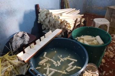 PRF descobre duas fábricas clandestinas de palmito em Cajati
