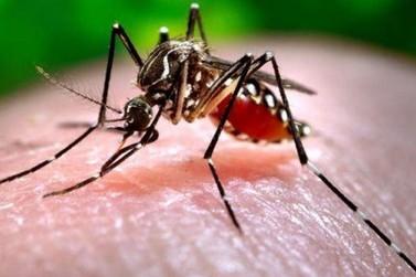 Agrochá, Centro e Ribeirópolis concentram maior número de infectados pela dengue