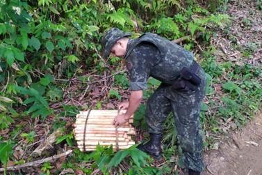 PF prende homem por transporte ilegal de palmito juçara e multa chega a R$ 68mil