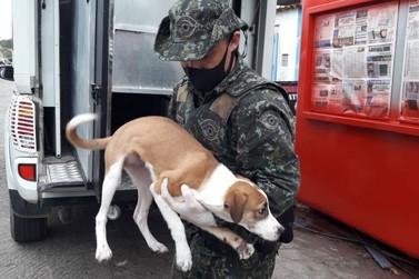 11 gatos e 6 cachorros são capturados em situação de maus tratos em Cananeia