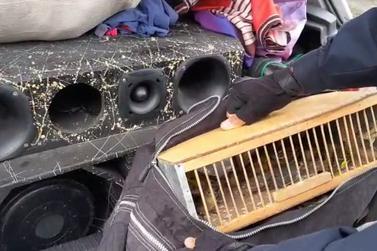 PRF apreende aves silvestres em automóvel
