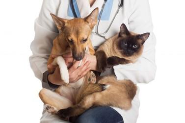 As inscrições para os interessados em castrar cães e gatos estão abertas