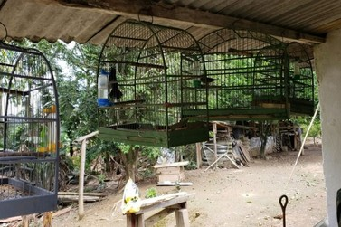 Ambiental resgata mais de 20 pássaros mantidos em cativeiro e apreende arma