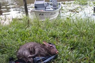 Ambiental flagra caça ilegal em Iguape
