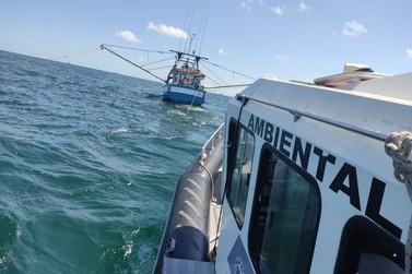 Meia tonelada de camarão pescado irregularmente é apreendido na Ilha Comprida
