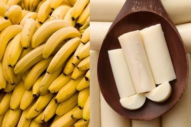 Banana e palmito se destacam como potenciais produtos de Indicação Geográfica