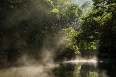 Legado das Águas tem quase 2 mil espécies da fauna e flora da Mata Atlântica