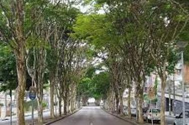 V Workshop Sobre Arborização Urbana do Vale do Ribeira