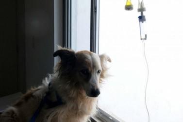 Governador anuncia clínica veterinária do programa Meu Pet em Registro