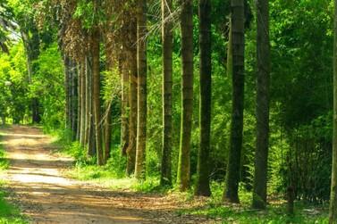 Concurso de Fotografia marca Dia da Árvore e Dia do Policial Militar Ambiental