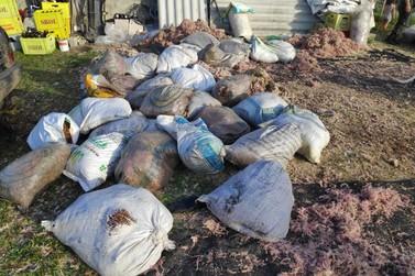 Infração ambiental de extração ilegal de musgos gera multa de R$ 30 mil