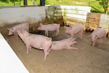 Prefeitura retoma compra de ração  para os animais da Escola Agrícola