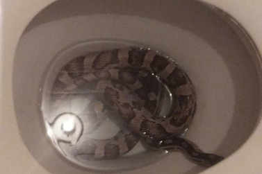 Cobra aparece dentro de vaso sanitário no Jardim Panorama