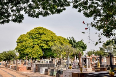 Limpeza de túmulos poderá ser feita no  sábado e domingo antes de Finados