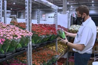 Mercado de flores aposta em novidades e prevê alta de 12%