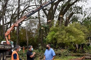 NAM terá novas árvores  e projeto paisagístico