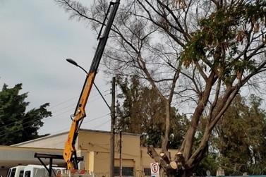 Por segurança, árvore é removida  em frente ao cemitério municipal