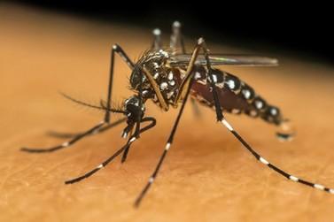 Sábado tem mutirão contra a dengue.