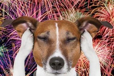Proteja seu pet durante a queima de fogos de artifício