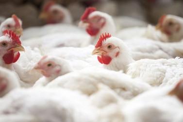 Demanda arrefecida derruba preços do frango no Brasil