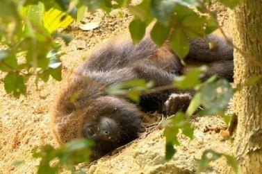 Paraná soma 40 mortes de macacos por febre amarela, aponta boletim