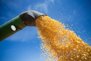 Preços do milho devem se sustentar em 2020