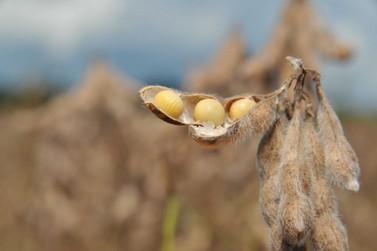 Produção de grãos pode alcançar 248 milhões de toneladas