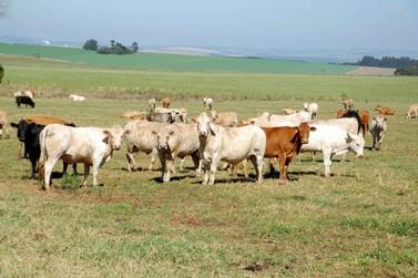Trânsito de bovinos e búfalos tem novas regras no Paraná