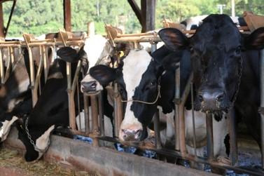 SH dá sequência ao programa de incentivo ao melhoramento genético do gado