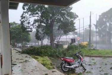 Vendaval derruba árvores e postes de energia em Palotina
