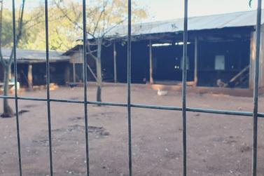 Animais são sacrificados dentro de Seminário na região