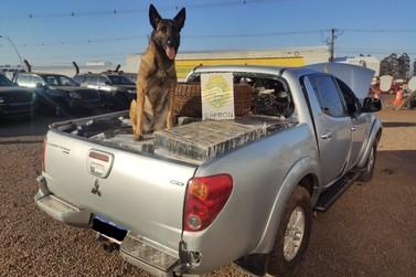 BPFRON apreende veículo carregado com mais de 1 ton de maconha em Pato Bragado