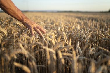 Confira a cotação do dia para trigo, soja e milho na região