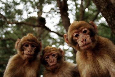 Macaco é encontrado morto em bairro rural de Santa Rita