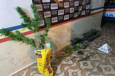 Polícia Militar encontra plantação de maconha no Talent Center em Santa Rita