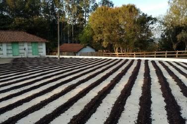 Governador Romeu Zema anuncia crédito recorde para a cafeicultura