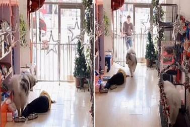 Funcionária de pet shop desmaia e é salva por cão que procurou ajuda