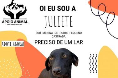 Campanha incentiva adoção de animais do Canil Municipal