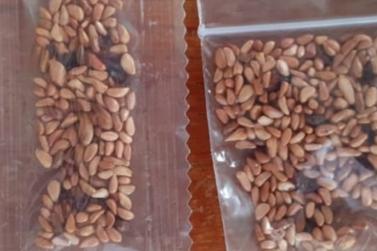 Aposentada recebe pacote de 'sementes misteriosas' em Rondônia