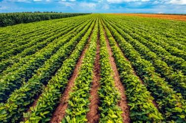 Brasil deve ter novo recorde de produção na safra de grãos 2020/21
