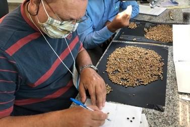 Formação de classificadores de café vai contribuir para qualidade do produto