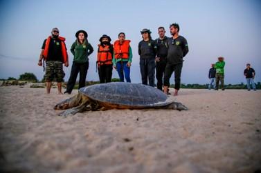 Maior fiscalização no período de eclosão de tartarugas e tracajás no rio Guaporé