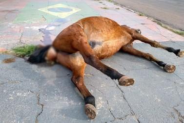 Cavalo é encontrado morto no centro de Umuarama