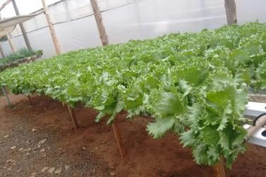 Projeto de horticultura fortalece agricultores familiares em Umuarama