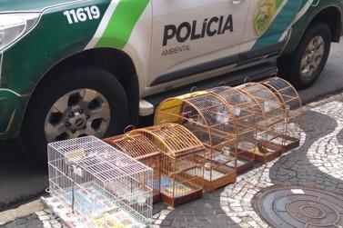 Polícia Ambiental apreende mais de 200 aves silvestres em Paranavaí