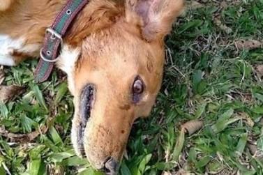 Polícia investiga envenenamento e morte de cães