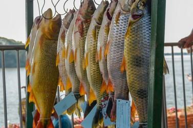 Confira o resultado do Campeonato de Pesca à Piapara em Porto Figueira