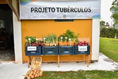 Cultivo mecanizado de tubérculos já mostra resultados em Umuarama