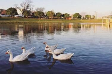 Sábado promete temperaturas agradáveis em Umuarama