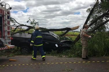 Motorista bate caminhonete em árvore e fica preso às ferragens em Umuarama
